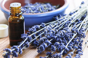 Aromatherapy oils and their uses lavender essential oil uses guide